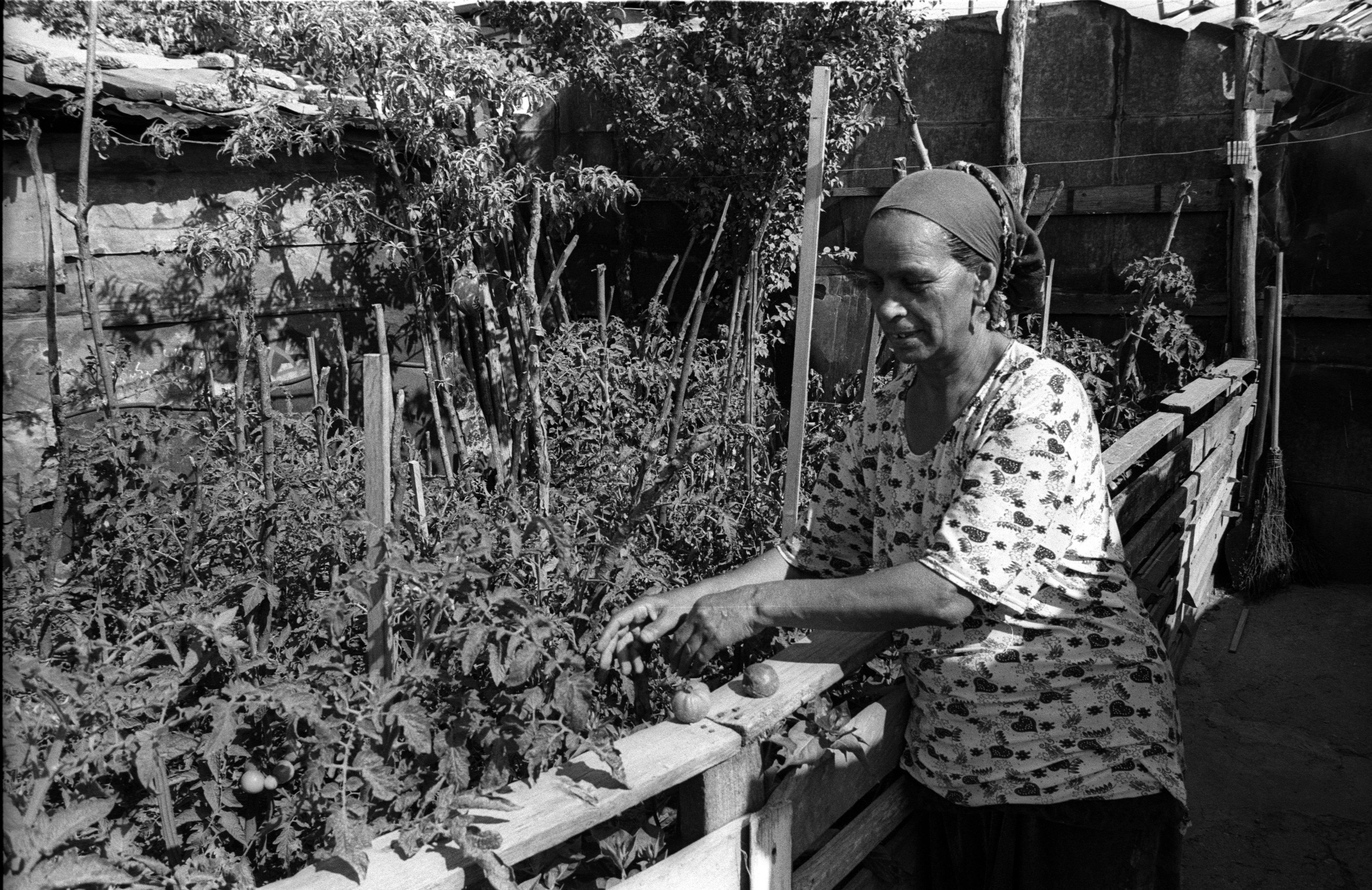 grandma tomatos