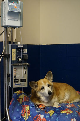 Large animal hospital, intravenous fluid