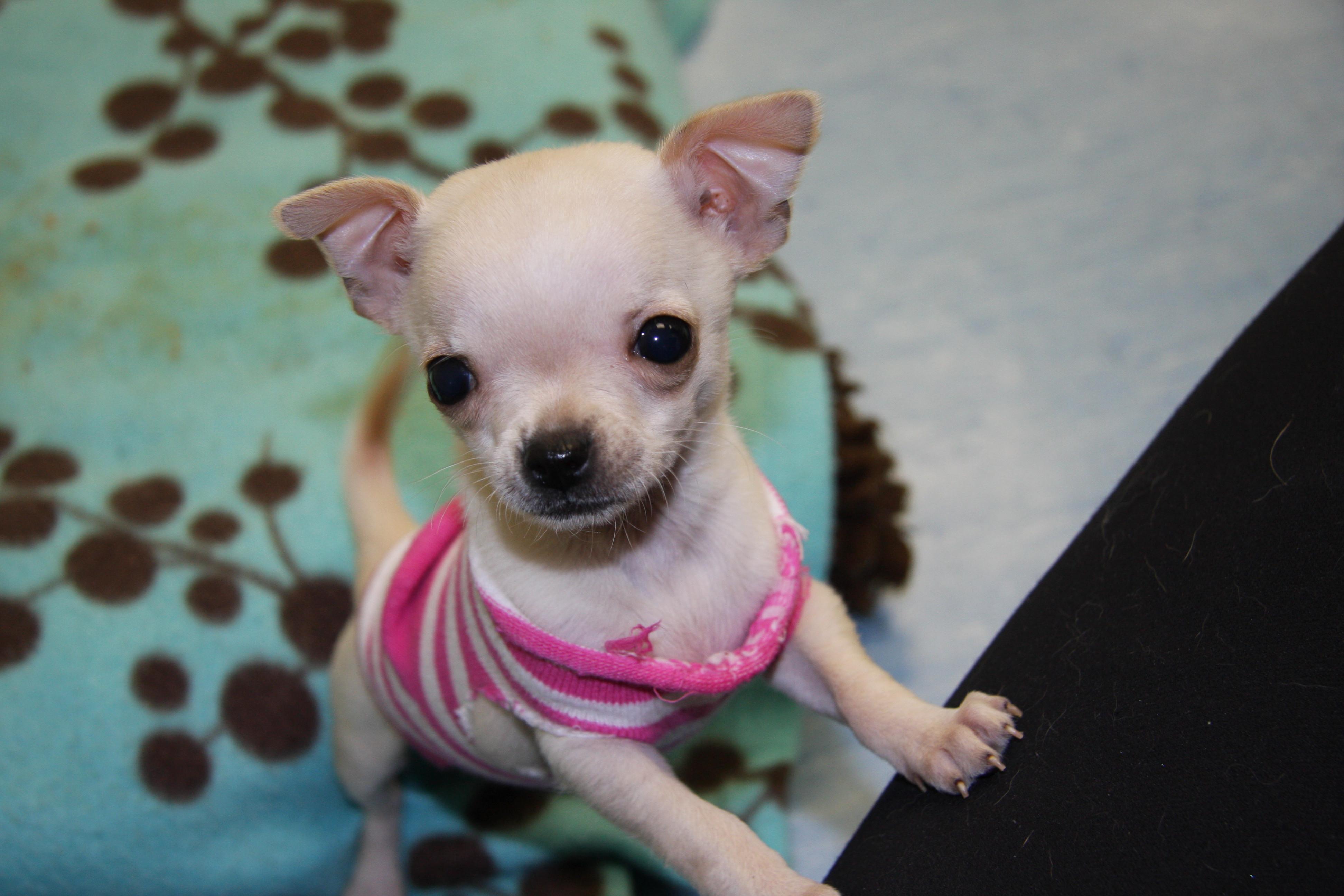 Puppy Preschool - Saturday Class