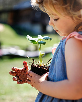 Small girl with dirty hands outdoors in garden, sustainable lifestyle concept..jpg