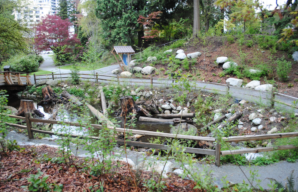 McDonald Creek rearing pond (11).JPG