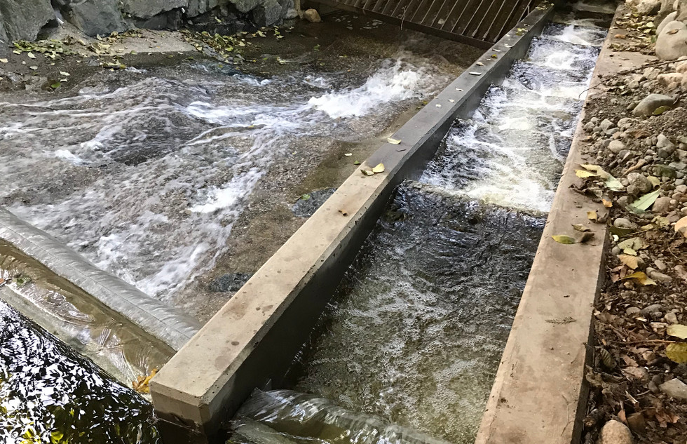 Lawson Creek Fish Ladder (9).JPG