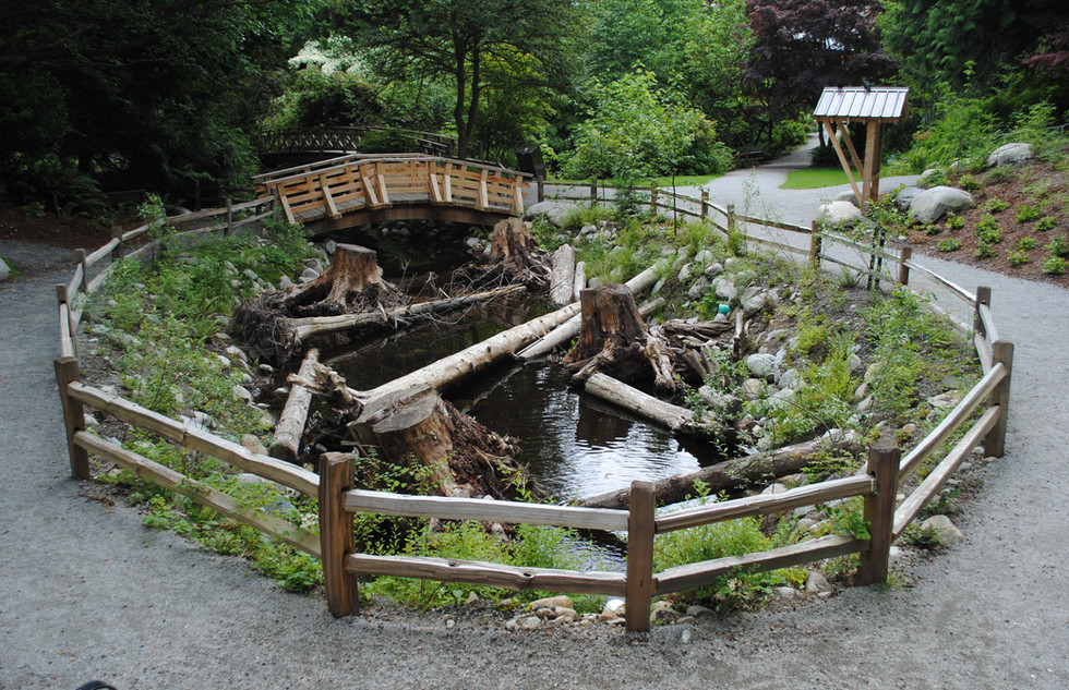 McDonald Creek rearing pond (9).JPG