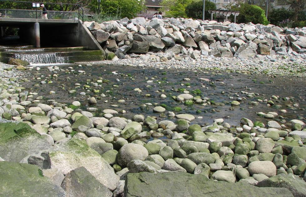 McDonald Creek Estuary Enhancement (3).J