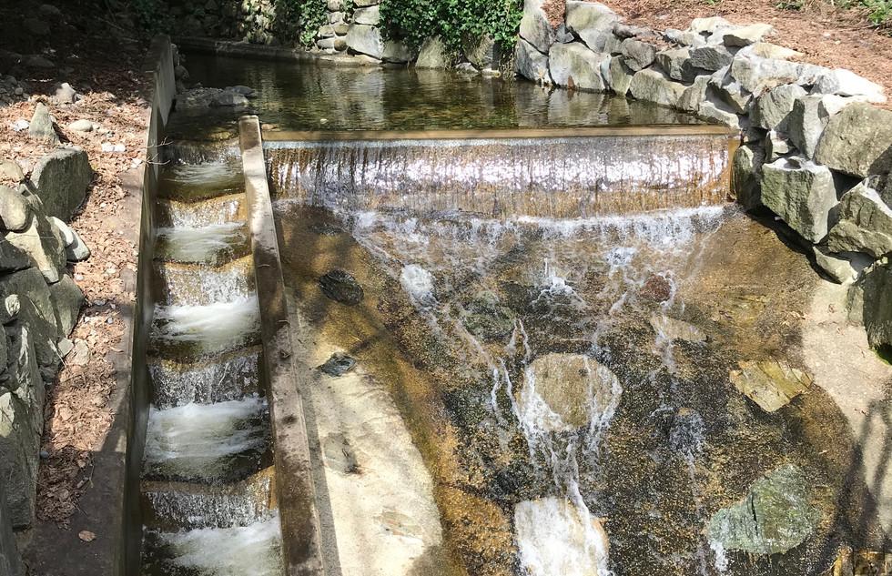 Lawson Creek Fish Ladder (11).JPG