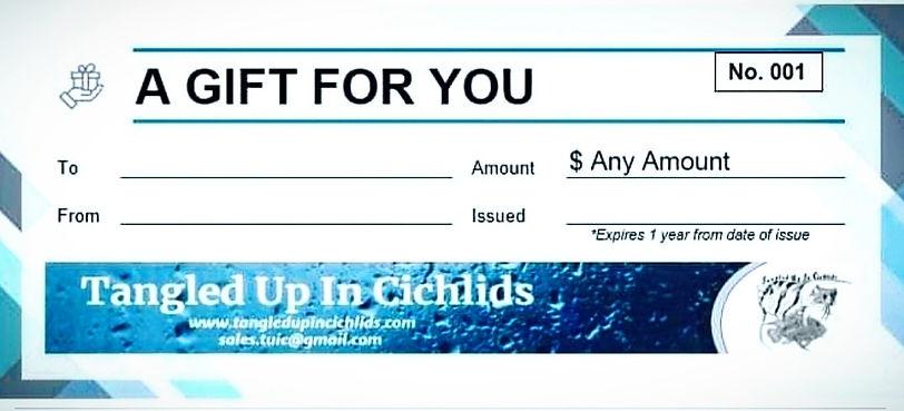 gift%20cert%20pic_edited.jpg