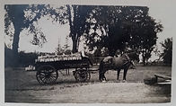 Edward N. Pearson drives the Harry M. Pearson & Sons fruit delivery wagon in Charlotte, NY