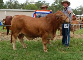 RSVP Nevada Grand Champion Gatton Futurity
