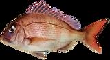 fish-3410329_1920.png