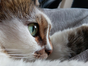 10 Things I Learned About Love When I Adopted a Cat.