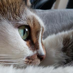 « Les yeux des chats »