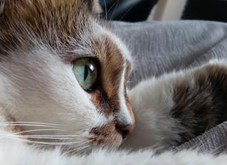 Demenz bei Hund und Katze: Ein Leben mit veränderten Ansprüchen