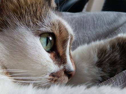 CatsMatter Changes Microchip Scanning Procedures of 23 Councils Nationwide