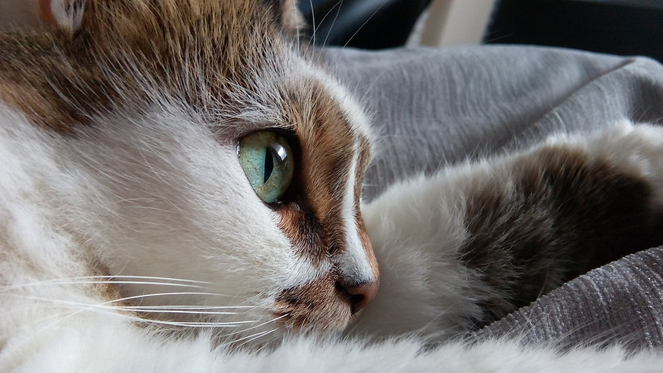 Olhos de um gatinho