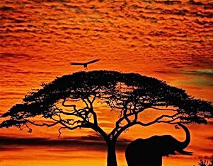 African Sunset  and Elephant