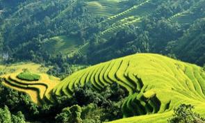Stunning rice fields in Mu Cang Chai