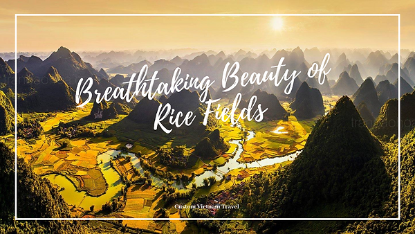 Breathtaking Beauty of Rice Fields.png