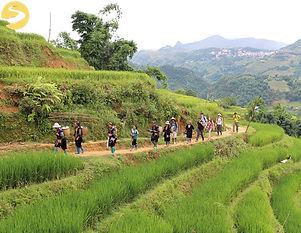 Trekking rice terraces