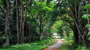 cuc-phuong-national-park.jpg