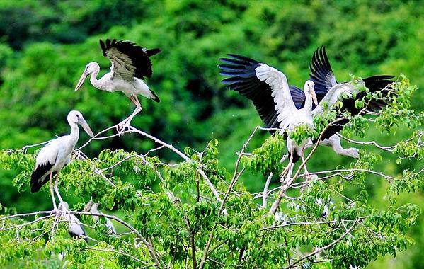 Ninh Binh Travel Guide Birds-in-Thung-Nham.jpg