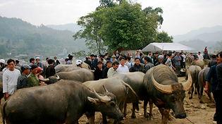 Bac Ha buffalo market