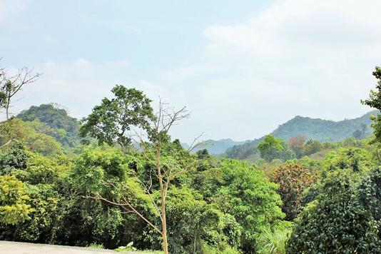 Cuc-phuong-park-01.JPG