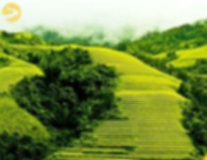 yellow-rice-sapa.jpg