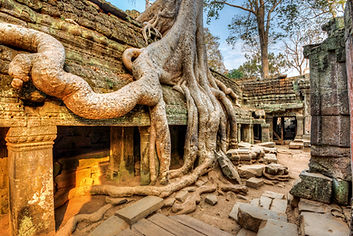 root over the ancient temple