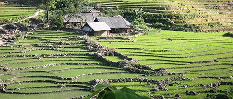 Sapa Terraces
