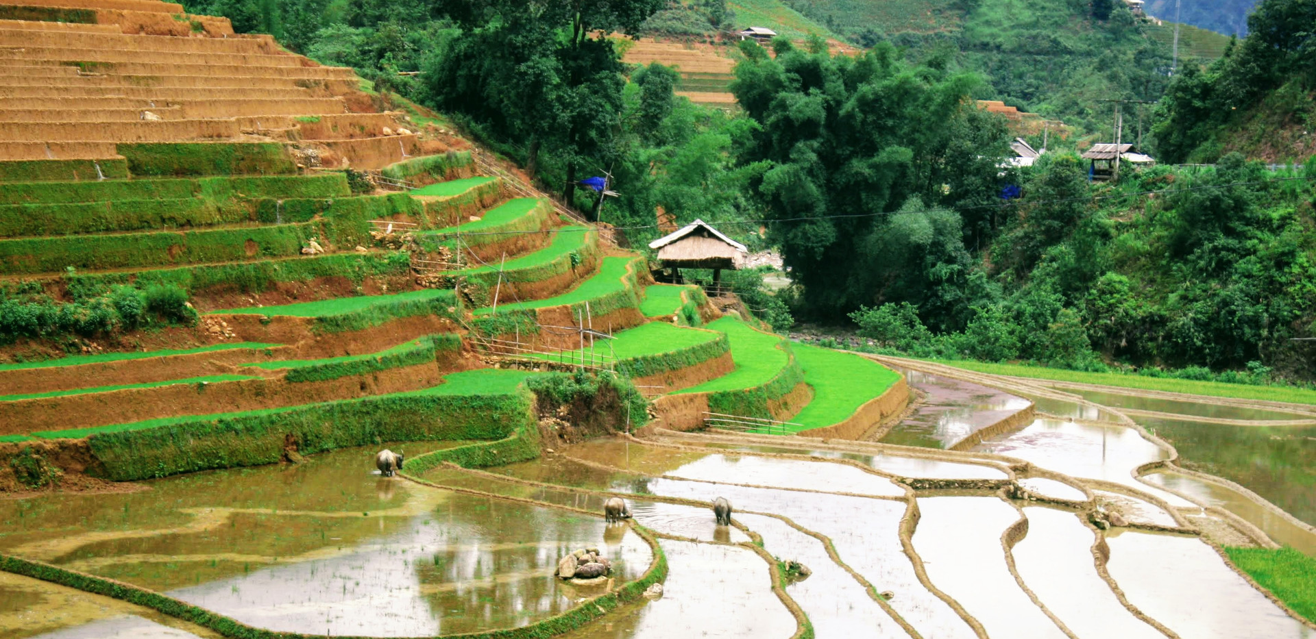 Local people is planting rice fields