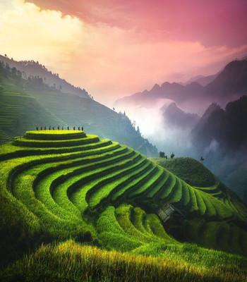 Mu Cang Chai-Viet Nam.jpg