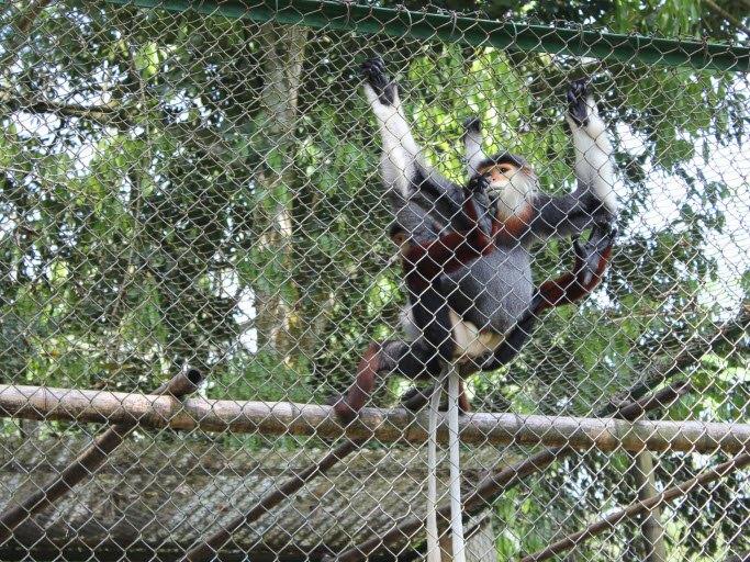 In the primate rescue center