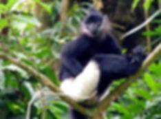 monkey in cuc phuong national park.jpg