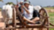 Ox Cart Ride In Siem Reap