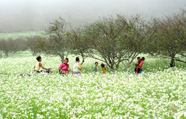 beautiful flower picture of Mai Chau The hidden places in Northern Vietnam
