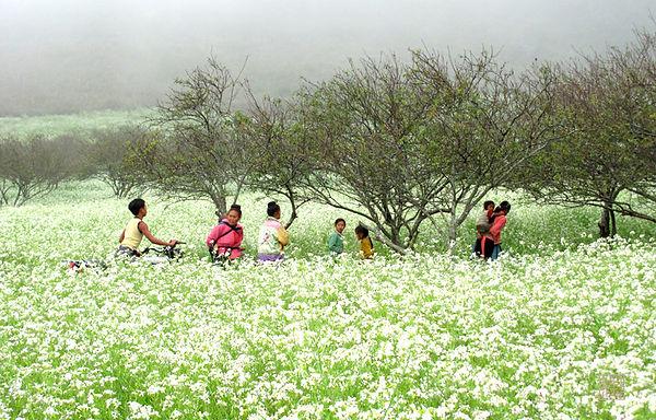 Mai Chau Travel Guide beautiful flower picture of Mai Chau in