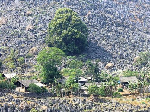 Houses on rock field