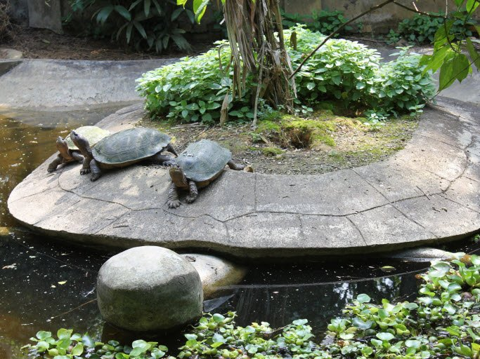 In the Turtle Conservation Center
