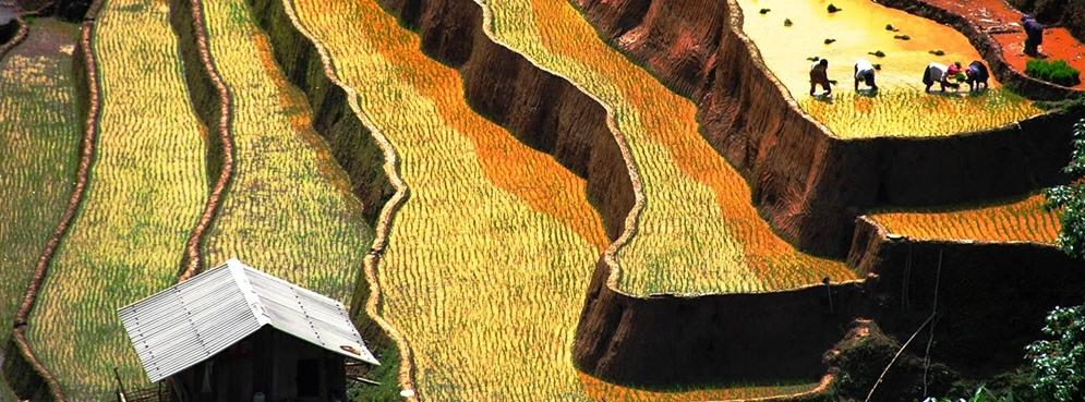 Rice planting in Mu Cang Chai