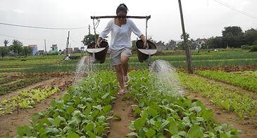 farming tour in Hoian