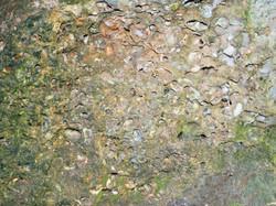 Fossil shells