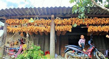 local house in Bac Ha