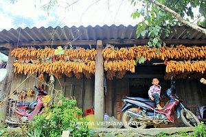 drying corn.jpg