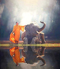monk & elephant