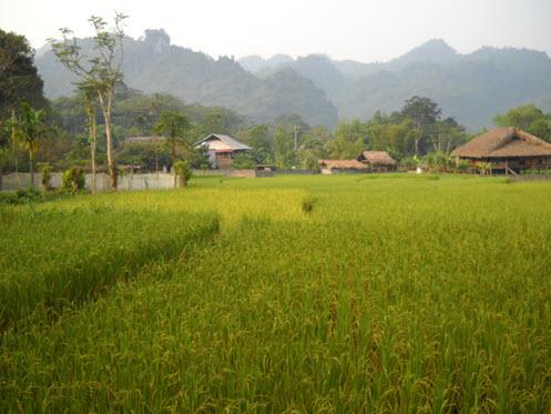 Tien Thang Village