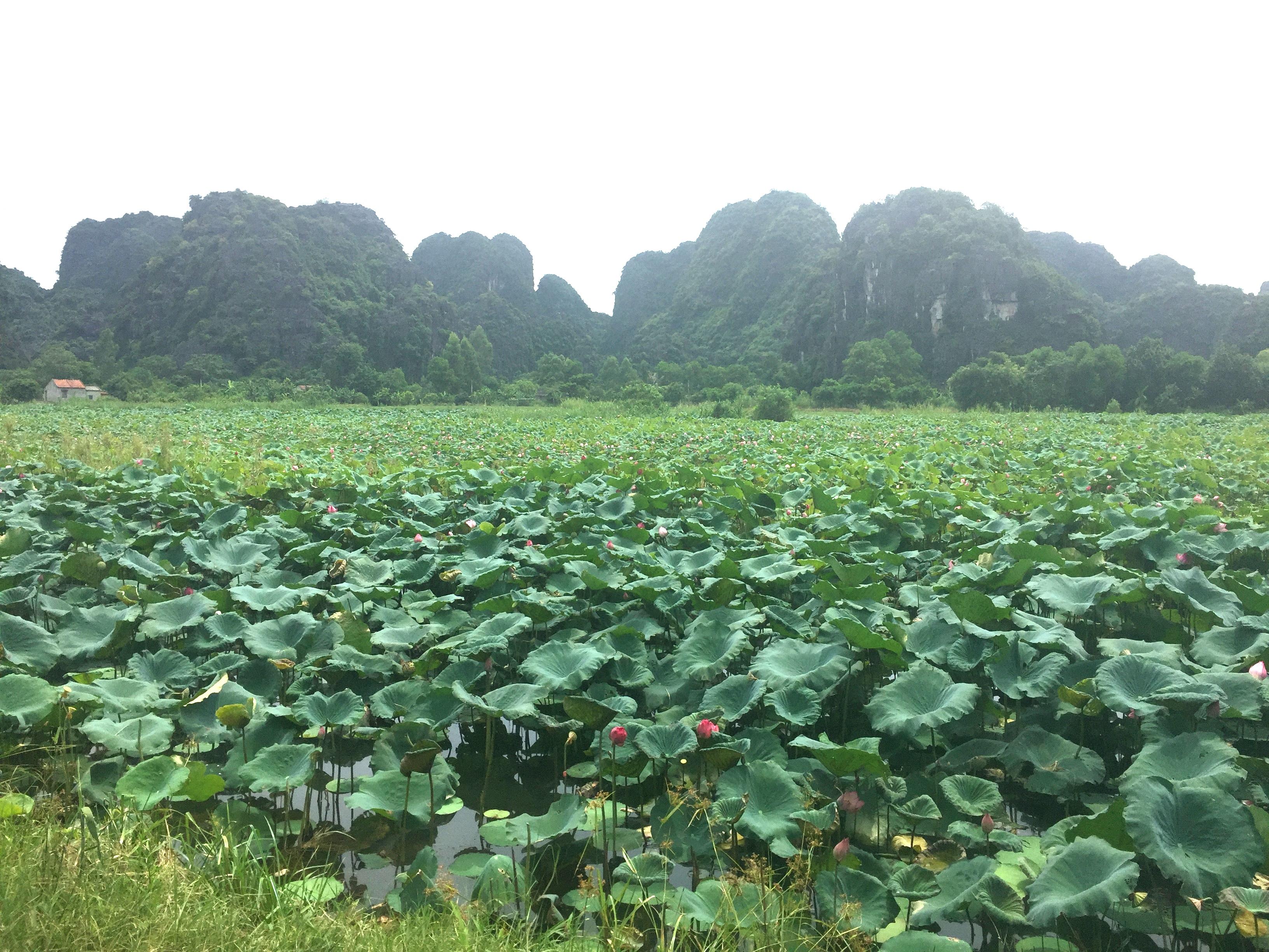 Ninh Binh Scenery