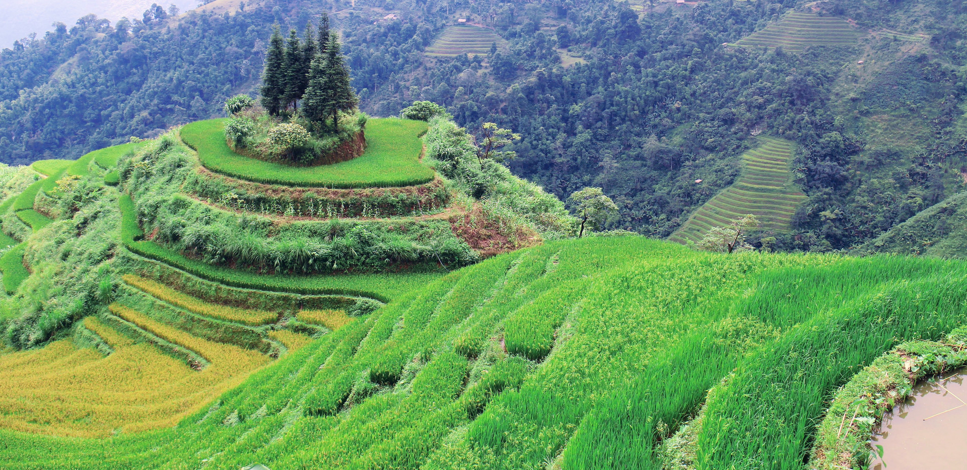 Unique rice fields in Ha Giang