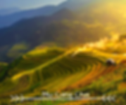 Mu Cang Chai Breathtaking Beauty of Rice