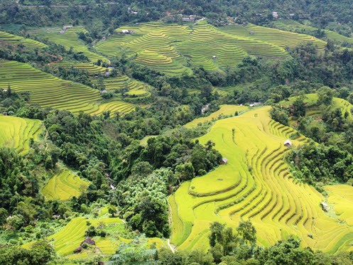 Hoang Su Phi Rice Terrace