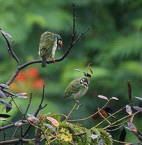bird in cuc phuong national park.jpg